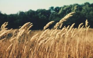 nature-field-summer-agriculture_smanjena-01